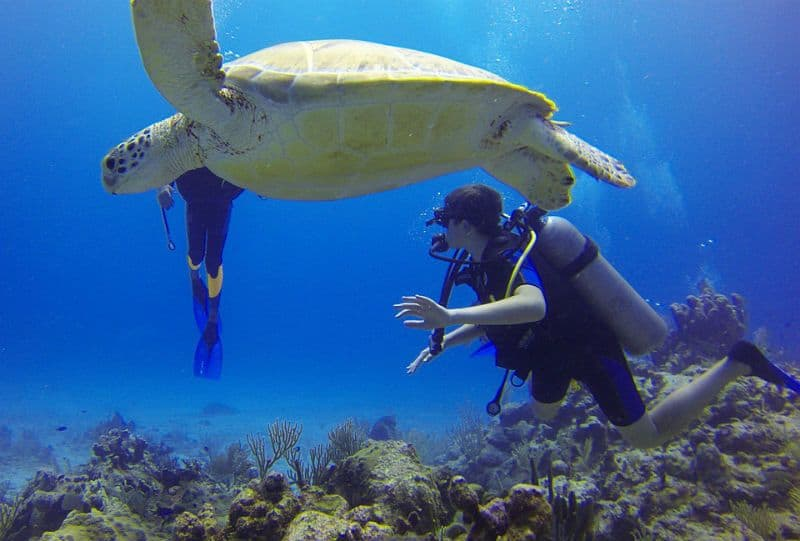 Great Barrier Reef Scuba Diving - Get PADI Open Water certified in Australia