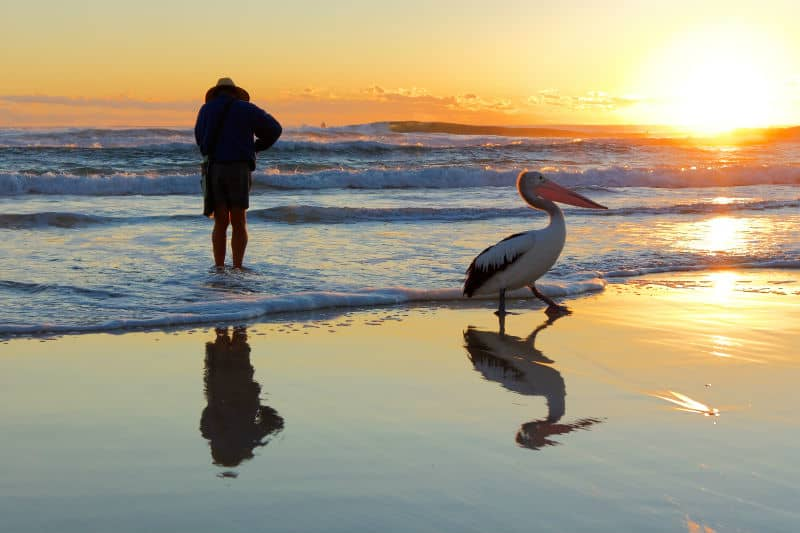 Man on an Australian Beach with a Pelican