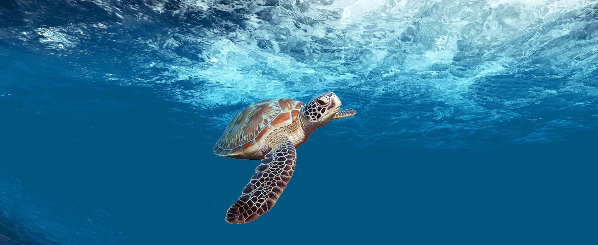 Where's your favorite spot to swim with Sea Turtles?